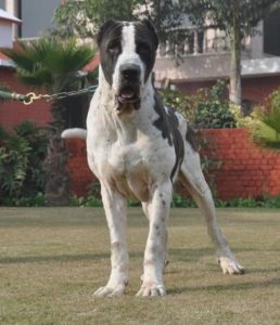 Bully-Kutta-Pictures